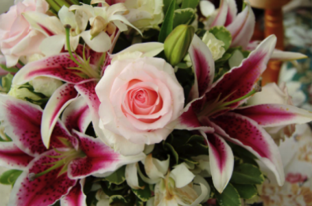 Cele mai frumoase flori în cutii pentru Sfântul Andrei, pe care le poți comanda de la Maison d'Or!