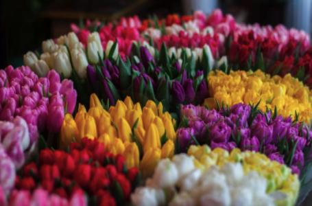 Care sunt florile preferate ale femeilor născute în zodia Gemeni? Floraria Maison D'or îți spune exact ce trebuie să alegi pentru a face un cadou perfect