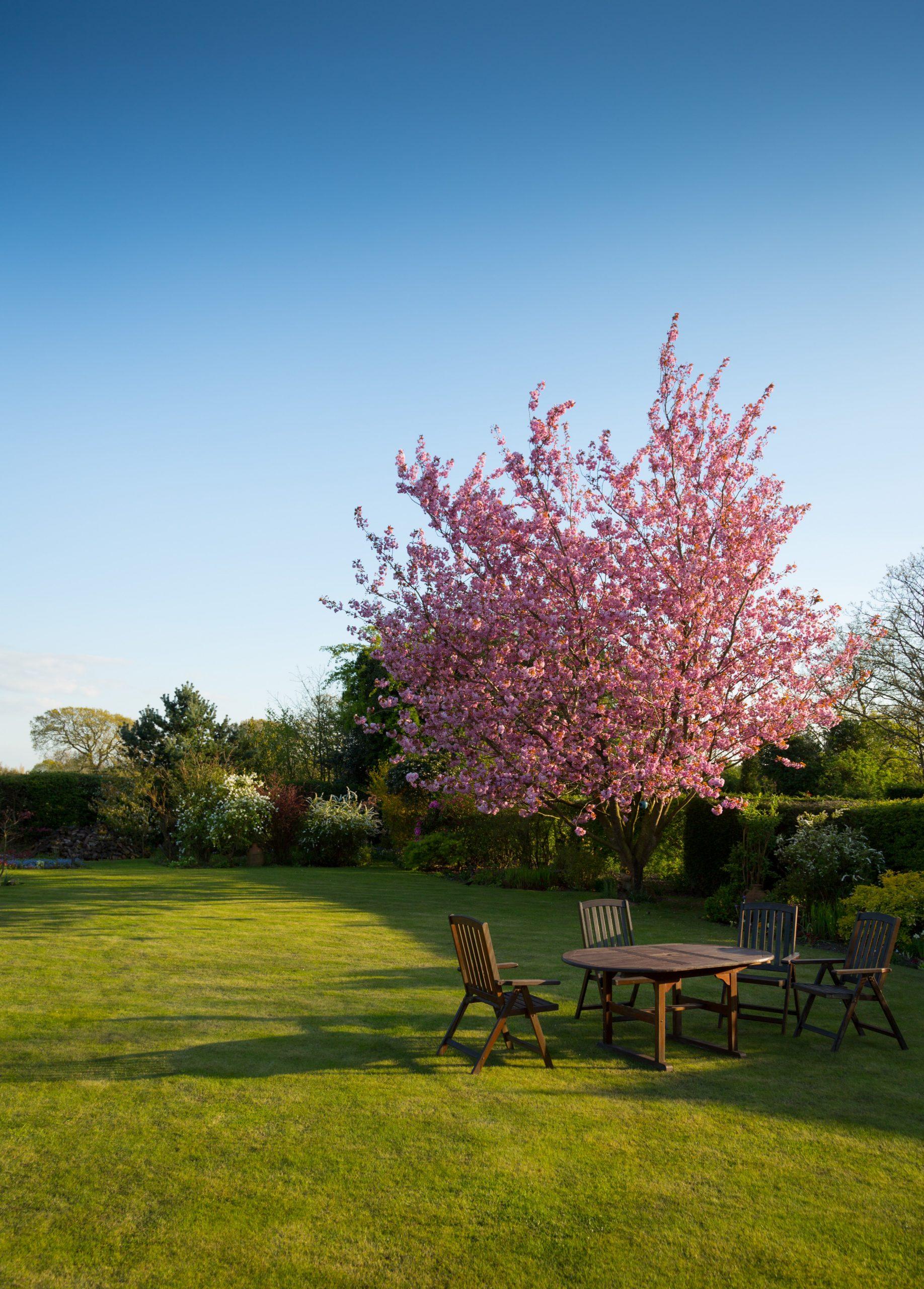 Merită să aleg mobilier de lemn pentru grădină?